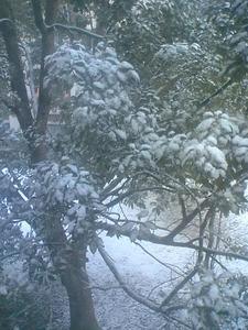 雪に映る樹木2