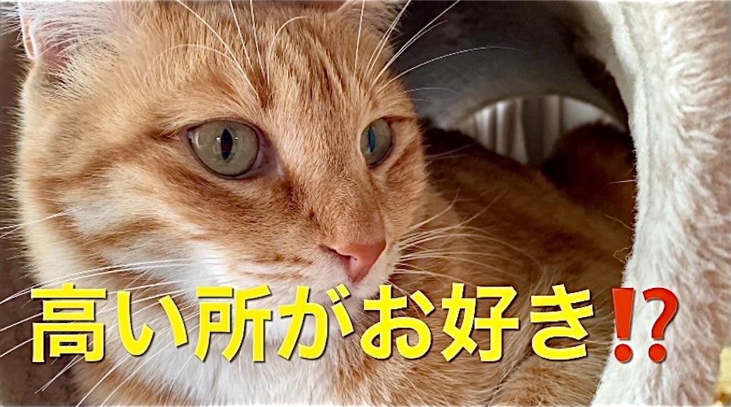 f:id:masaki6379:20210118203938j:image