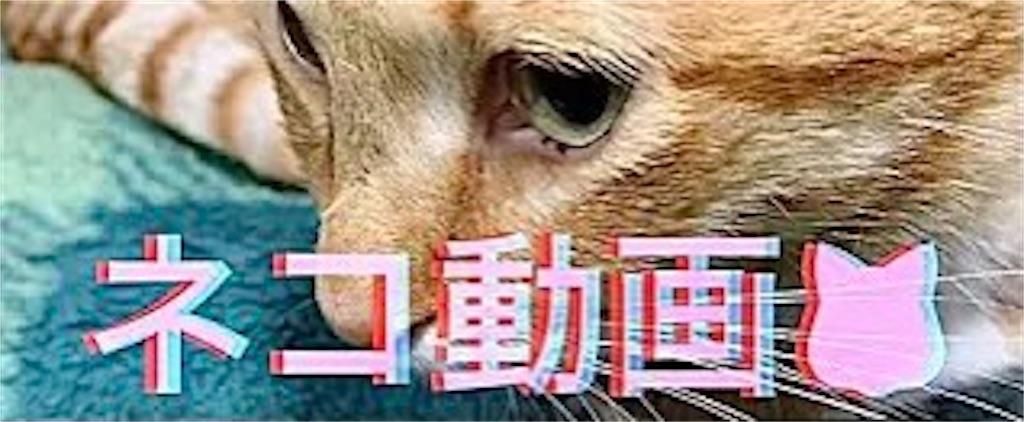 f:id:masaki6379:20210118205212j:image