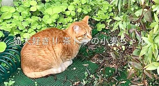 f:id:masaki6379:20210128124612j:image