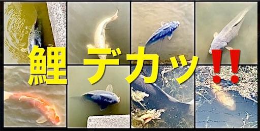 f:id:masaki6379:20210420121153j:image