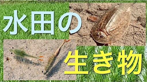 f:id:masaki6379:20210711183101j:image