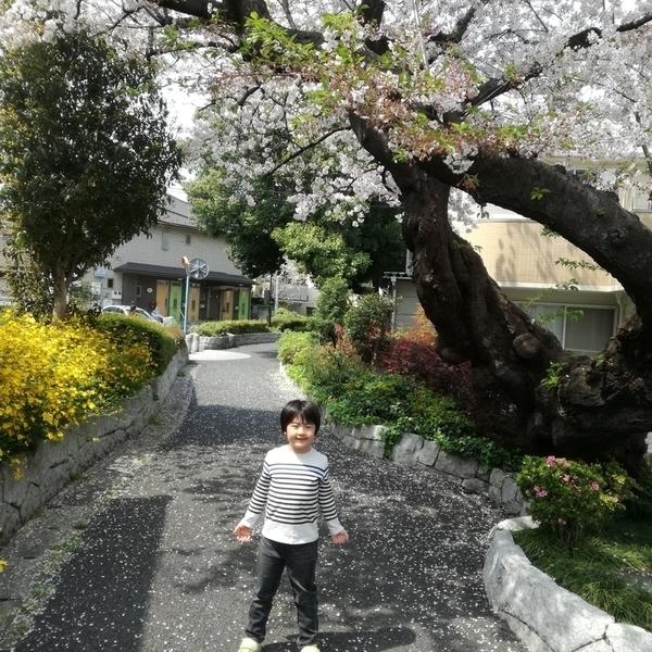 f:id:masakiwasada:20190412114118j:plain