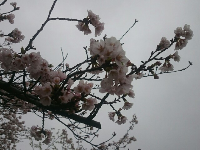 f:id:masami-happy:20170409235118j:image