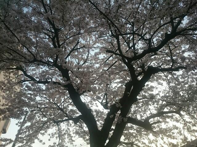 f:id:masami-happy:20170411233706j:image