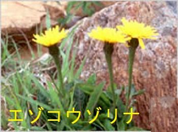 f:id:masami71:20160711201202j:image:left