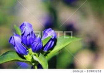 f:id:masami71:20170717215424j:image:left
