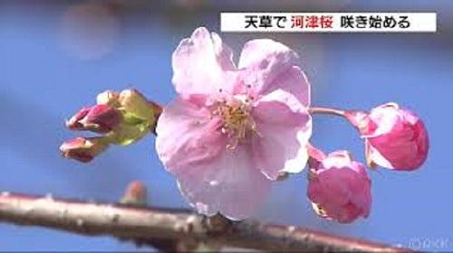 f:id:masami71:20190124123404j:image