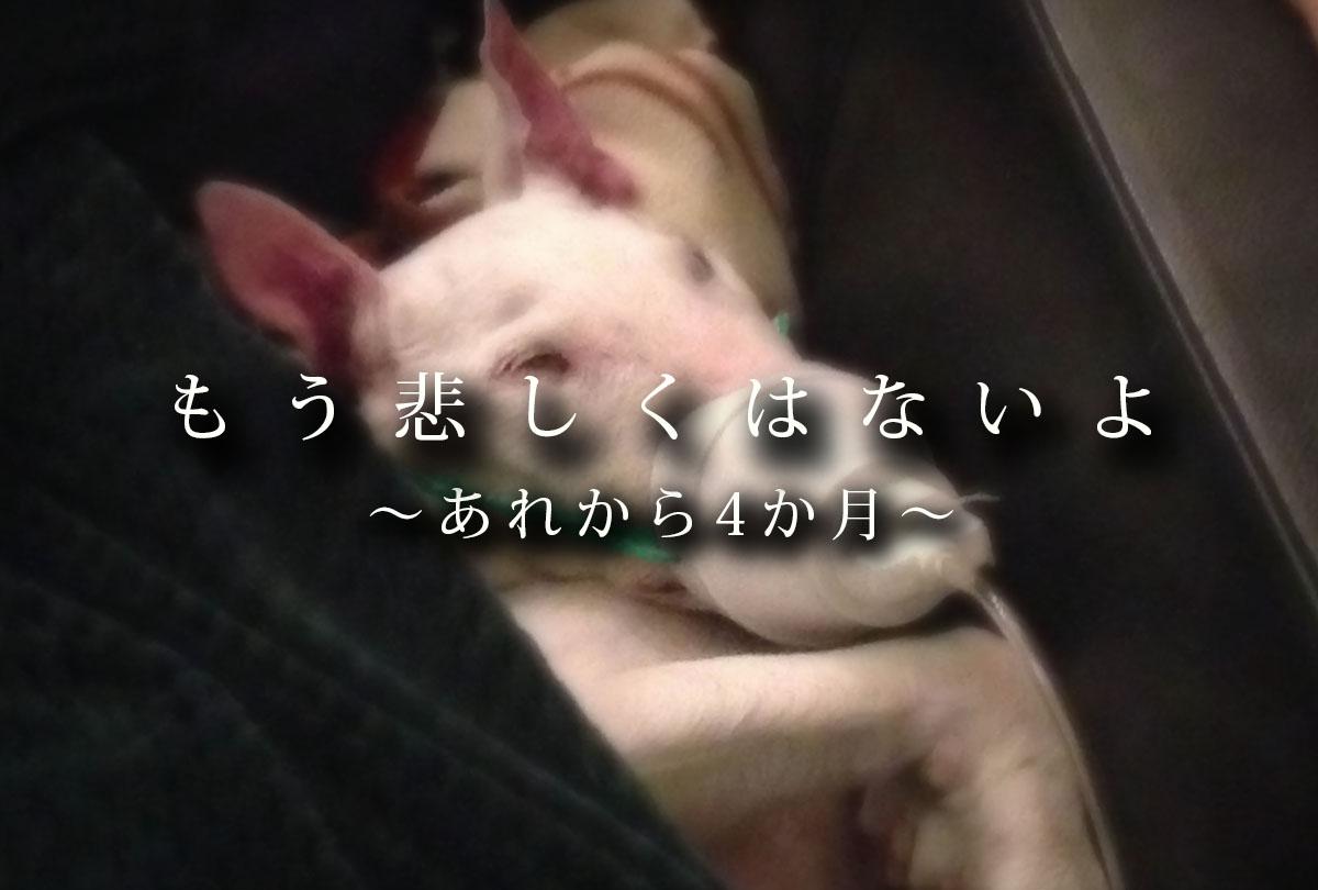 f:id:masami_takasu:20011124120550j:plain