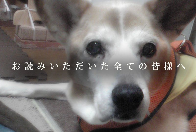 f:id:masami_takasu:20071103133328j:plain