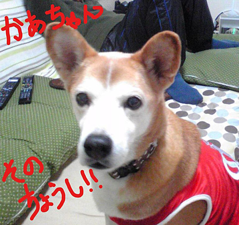 f:id:masami_takasu:20131214221000j:plain