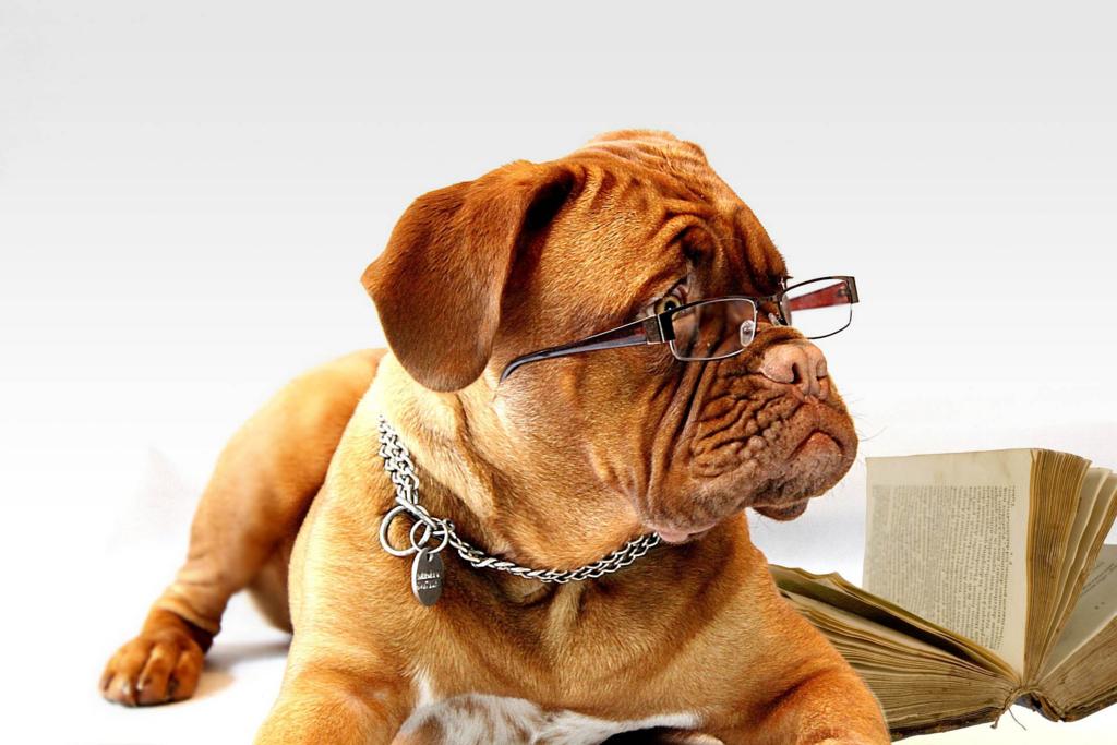 犬の人間年齢