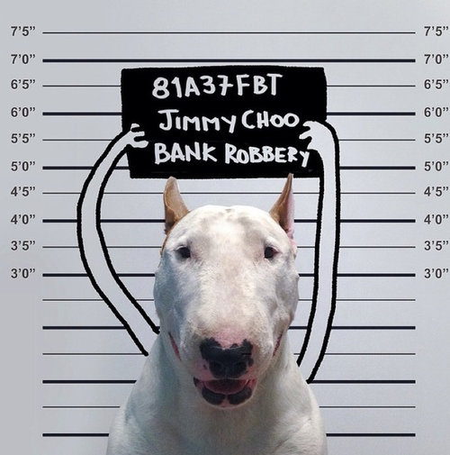 外出中に逮捕されたら、家に残したペットはどうなる?