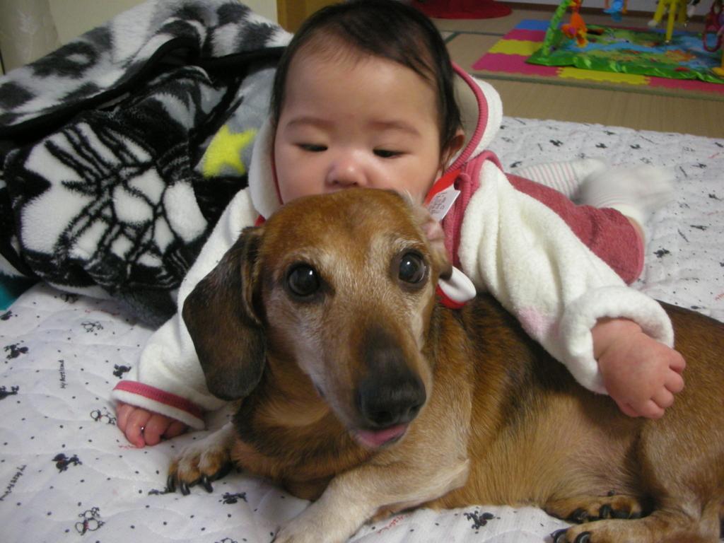 人は犬に育てられている