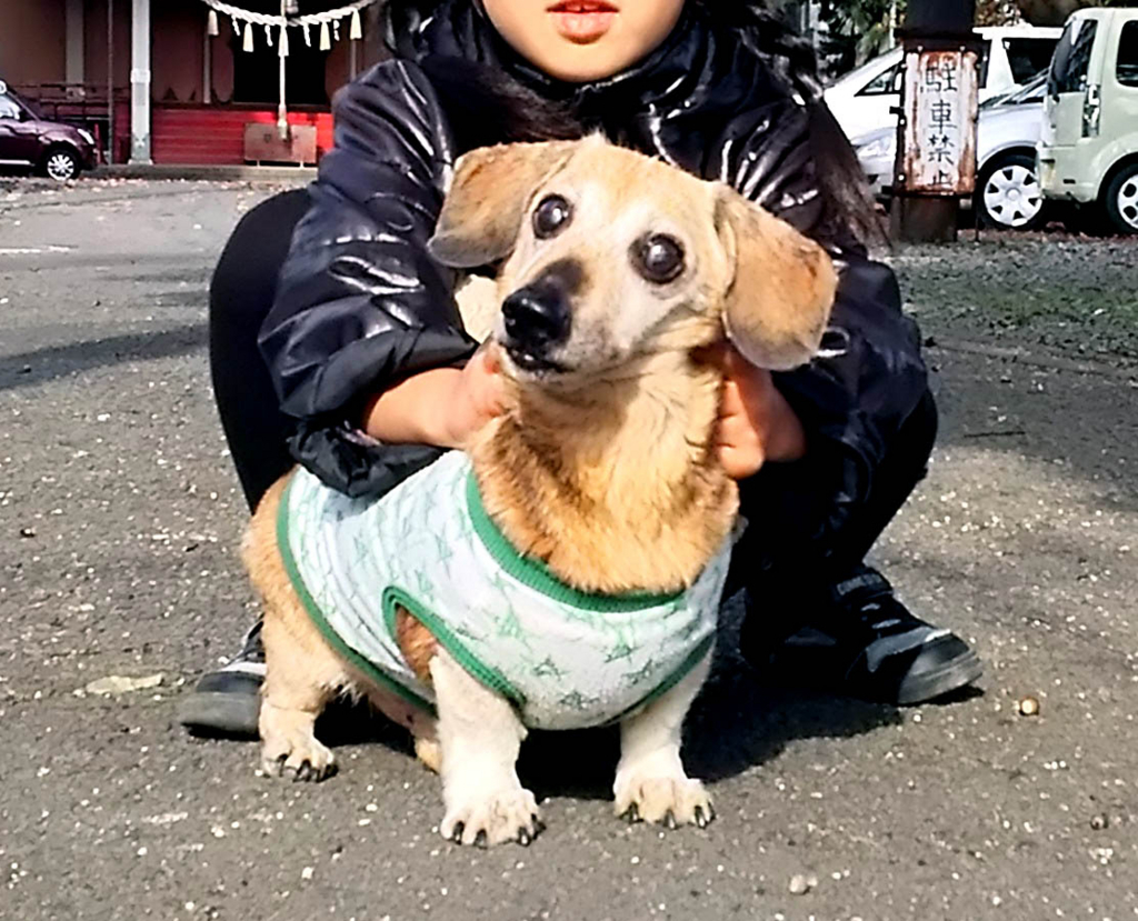 f:id:masami_takasu:20180130180742j:plain