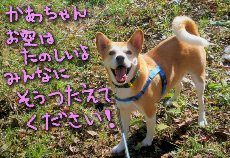 f:id:masami_takasu:20180216111632j:plain