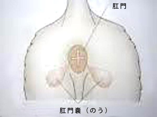 f:id:masami_takasu:20180219213953j:plain
