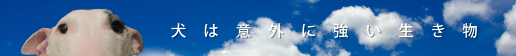 f:id:masami_takasu:20180309175118j:plain