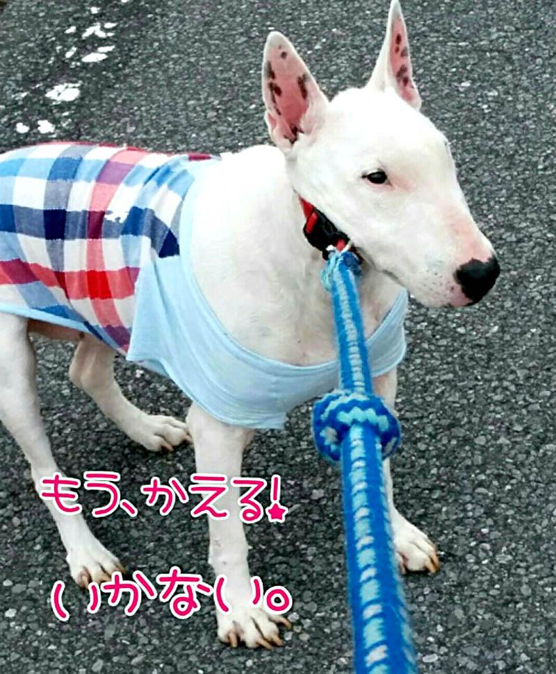 f:id:masami_takasu:20180329134145j:plain