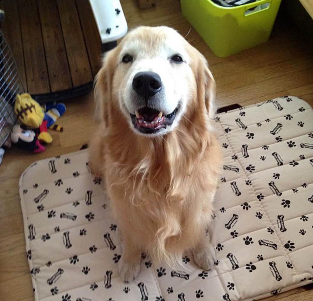 腎不全の犬と家族の思い出