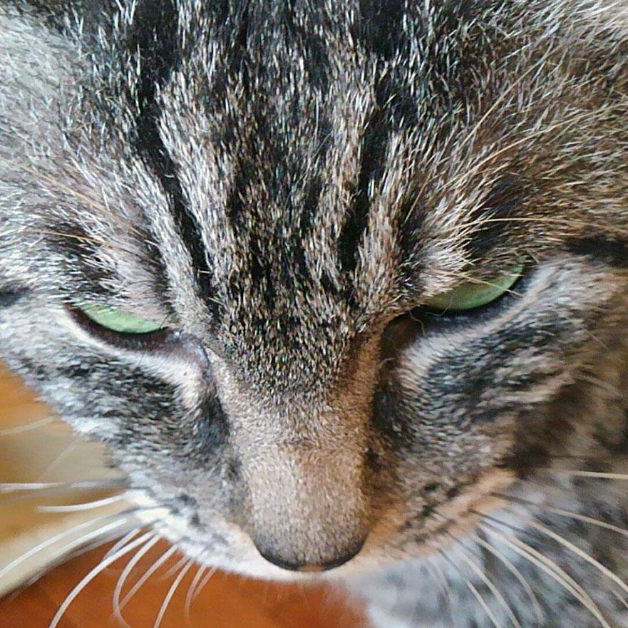 21歳の猫ボスの腎不全闘病記