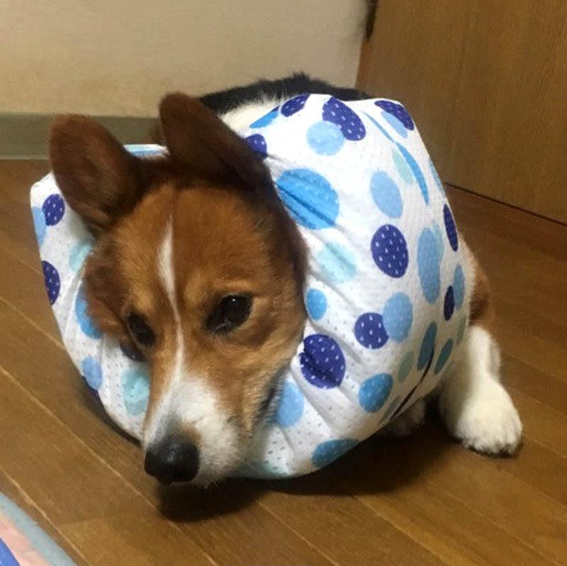f:id:masami_takasu:20180621095601j:plain