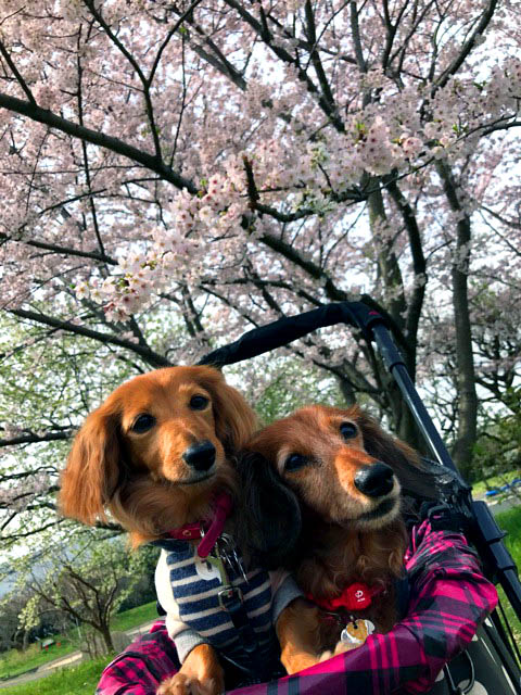 f:id:masami_takasu:20180701115944j:plain