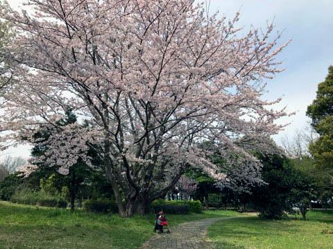 f:id:masami_takasu:20180701121431j:plain