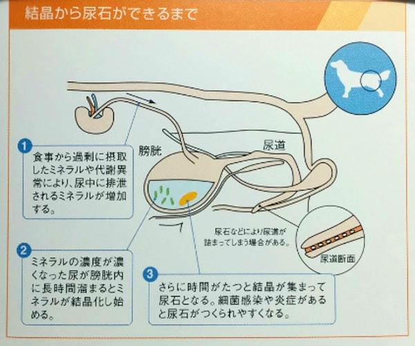 f:id:masami_takasu:20180702122728j:plain