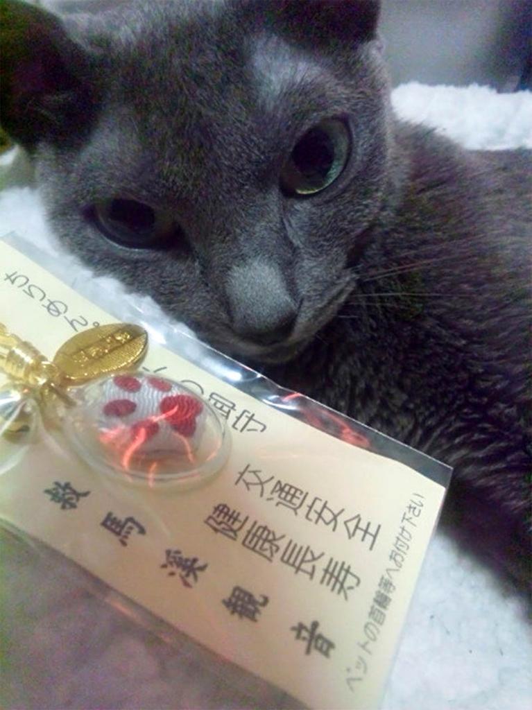 f:id:masami_takasu:20180726195654j:plain