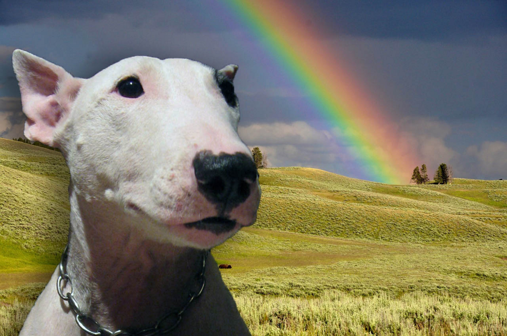 虹の橋・考察 ~知っていたようで、実は知らなかったこと~