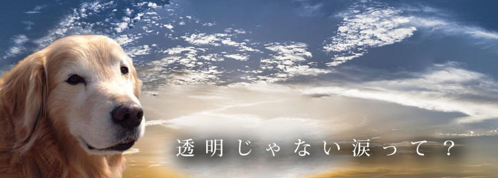 f:id:masami_takasu:20180817142238j:plain