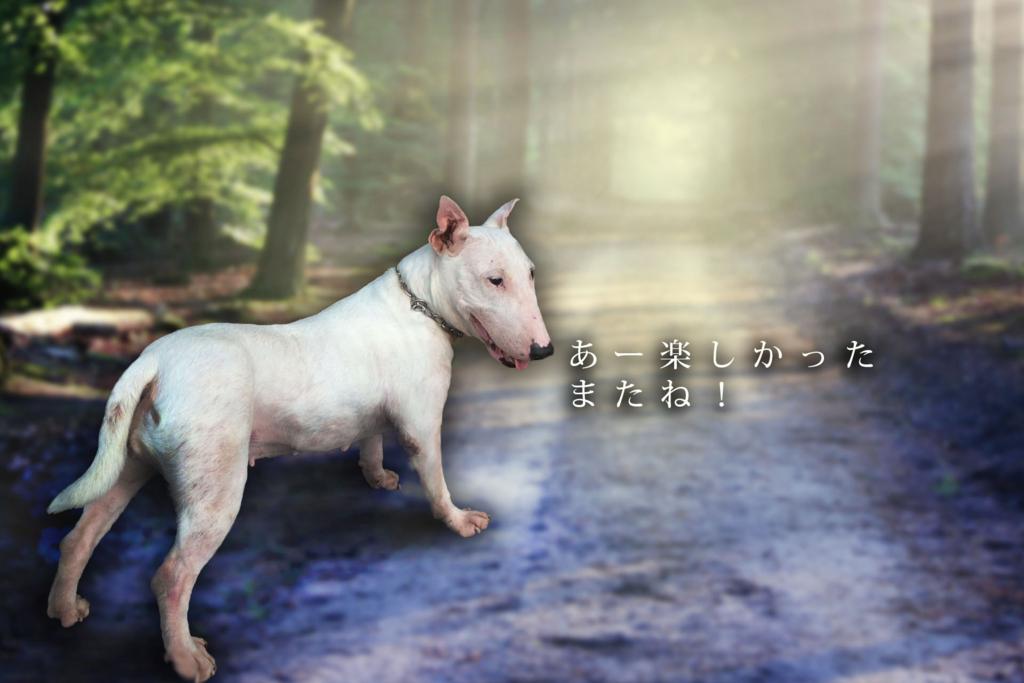 愛犬、愛猫との別れのイメージ