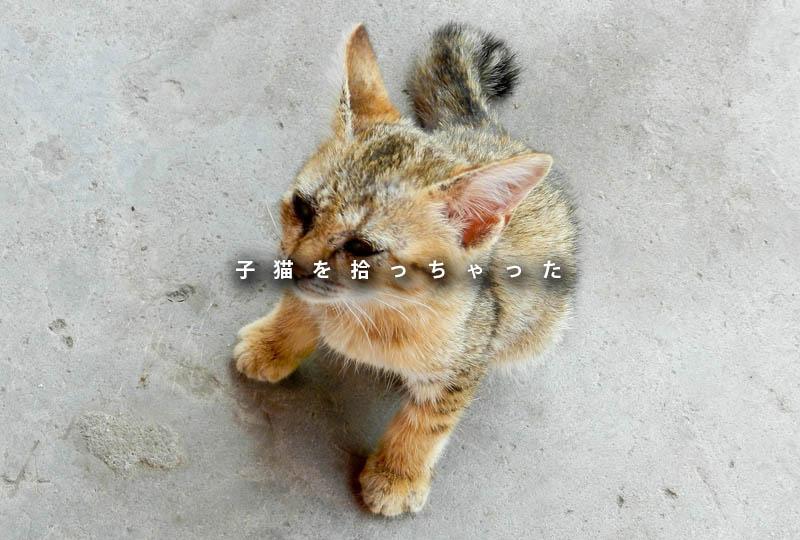 f:id:masami_takasu:20180914072847j:plain