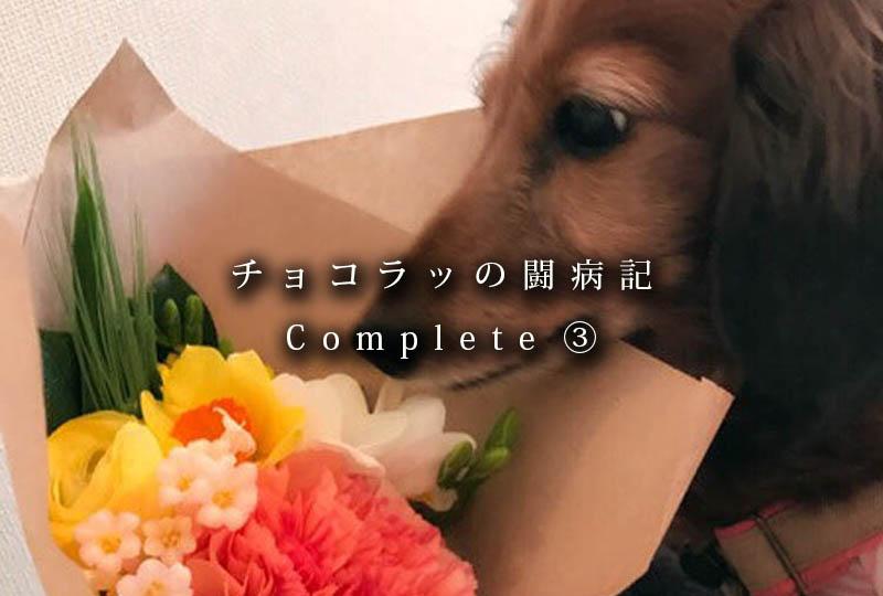f:id:masami_takasu:20181002115353j:plain