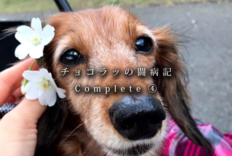 f:id:masami_takasu:20181002140057j:plain