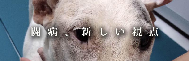 f:id:masami_takasu:20181003172639j:plain