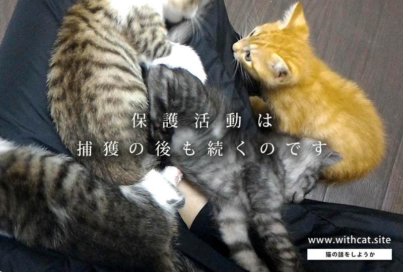 f:id:masami_takasu:20181004181753j:plain