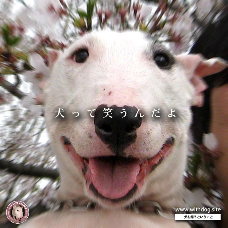 犬の笑い顔と笑顔