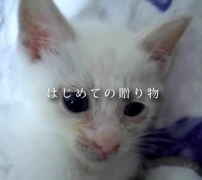f:id:masami_takasu:20181106230525j:plain