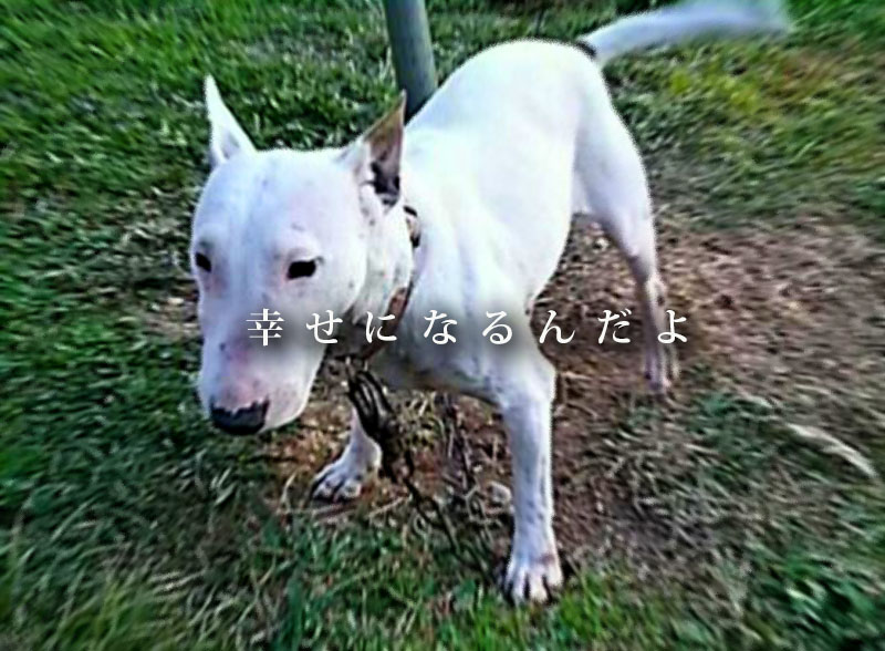 f:id:masami_takasu:20181111180831j:plain