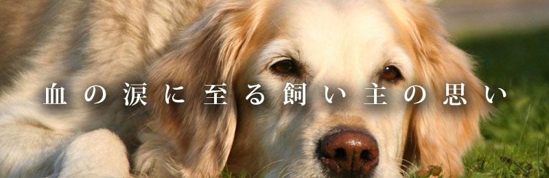 f:id:masami_takasu:20181113162927j:plain
