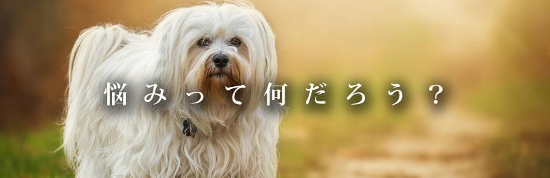 f:id:masami_takasu:20181113172345j:plain