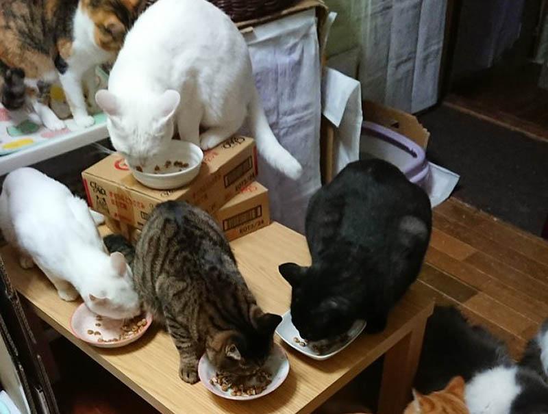 f:id:masami_takasu:20181119143539j:plain