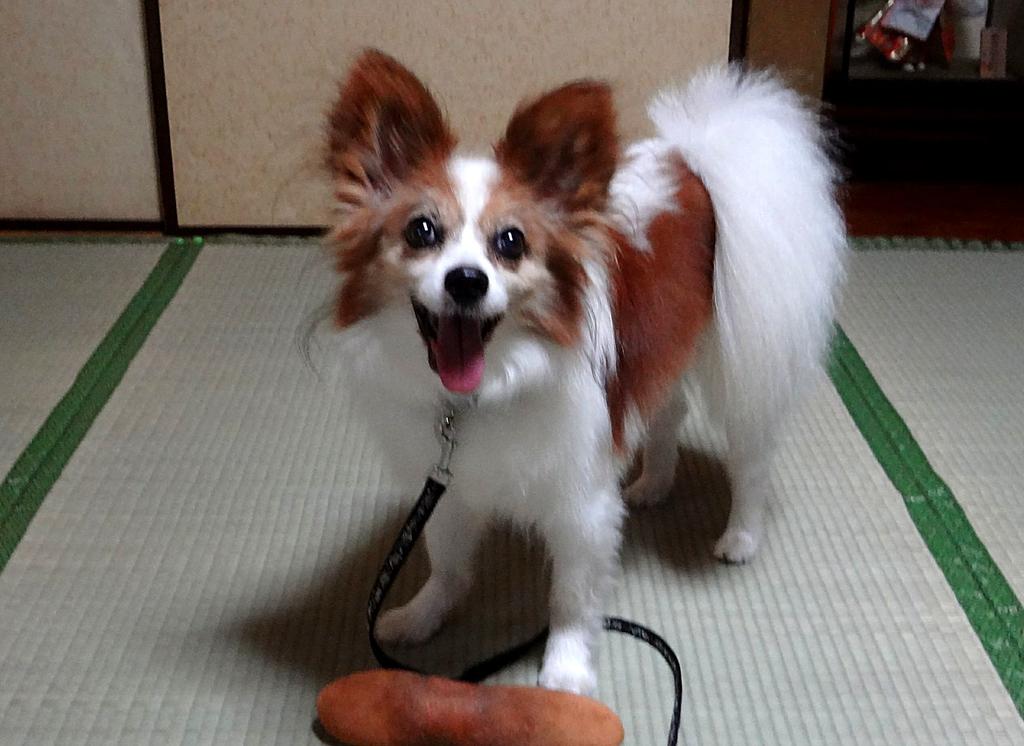 f:id:masami_takasu:20181121134854j:plain