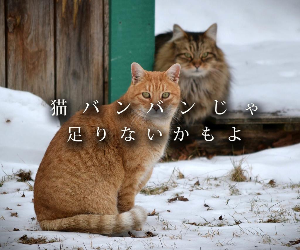 f:id:masami_takasu:20181202170754j:plain