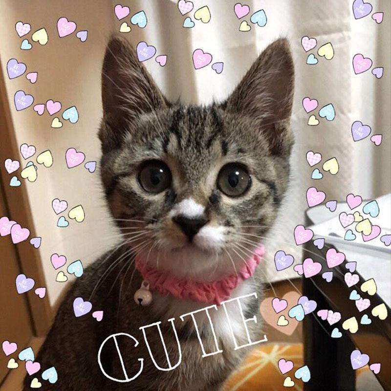 f:id:masami_takasu:20181216165015j:plain
