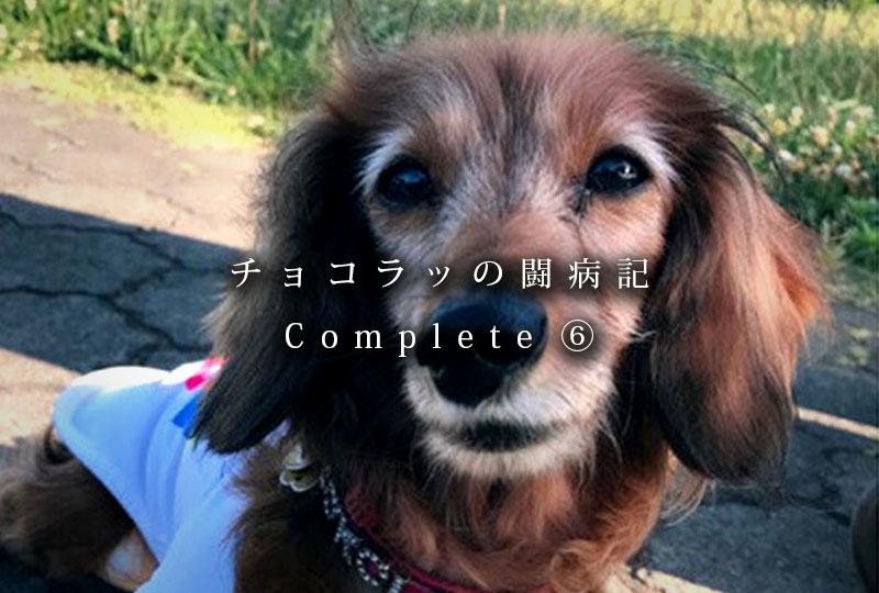 f:id:masami_takasu:20181222081559j:plain