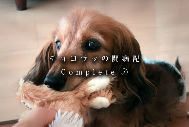 f:id:masami_takasu:20181222104702j:plain
