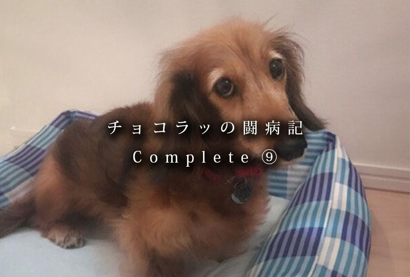 f:id:masami_takasu:20181222132756j:plain